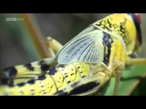 BBC Documentary - Insect Worlds: Them & Us - Episode 1