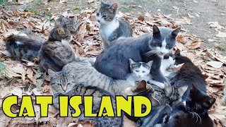 Turkey's Cat Island 4