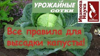 Никогда не используйте ЭТО удобрение для капусты и ещё 11 ПРОСТЫХ правил посадки рассады.