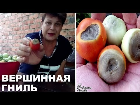 Вопрос: Как вылечить вершинную гниль у помидоров?