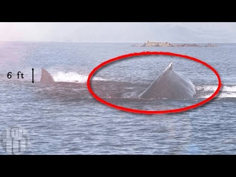 10 Megalodon Caught on Camera & Spotted In Real Life!