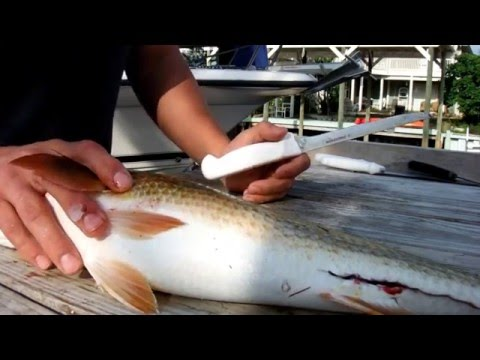 How To Clean A Redfish