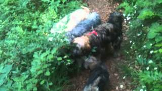 Wanderung Am Tag Des Hundes
