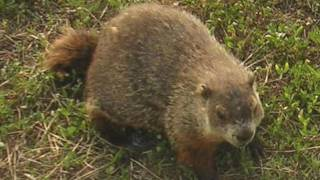 """The Groundhog"" by Richard Eberhart (read by Tom O'Bedlam)"