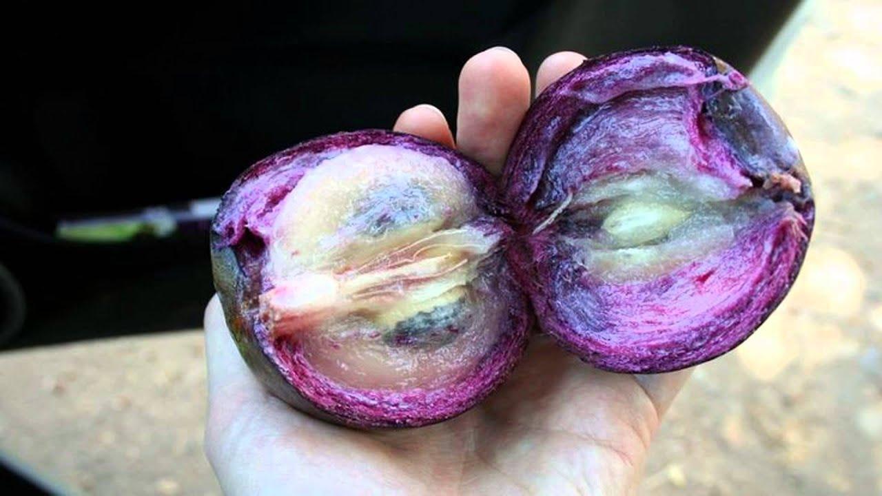 las frutas caimito pueden curar la diabetes