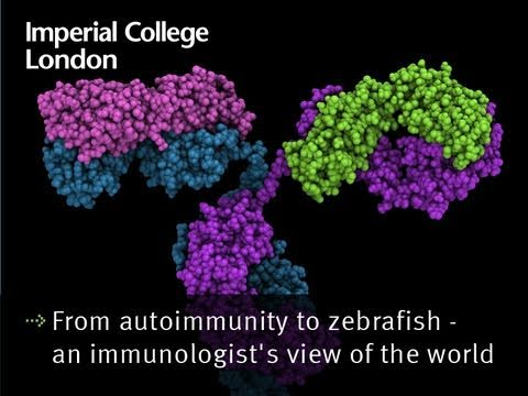 From autoimmunity to zebrafish -- an immunologist's view of the world