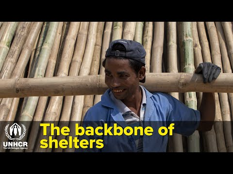 Super-strength Bamboo Helps Refugees And Bangladesh's Forests