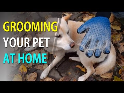 Pet Hair Brush Cleaning Massage Glove | Grooming Your Pet Easily - TheEliteTrends