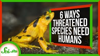 6 Ways Species Rely on Humans for Survival