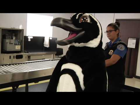 LGB's TSA Cares About Maria the Magellanic Penguin