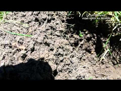 Metal detecting, Coins and Relics even Civil war!