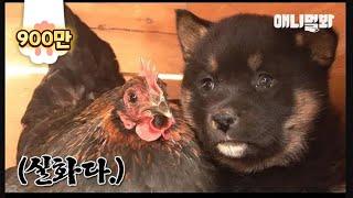모자 사이라는데 닮은 거라곤 털 색깔뿐인 거 실화냐 l Puppies