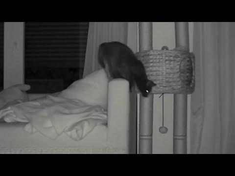 Wie Sehen Katzen Nachts