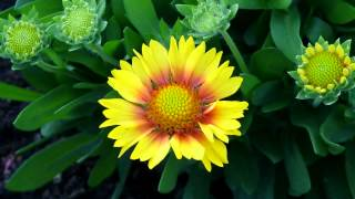 Video BEAUTY IN NATURE - ERNESTO CORTAZAR - SERENITY download MP3, 3GP, MP4, WEBM, AVI, FLV Agustus 2018