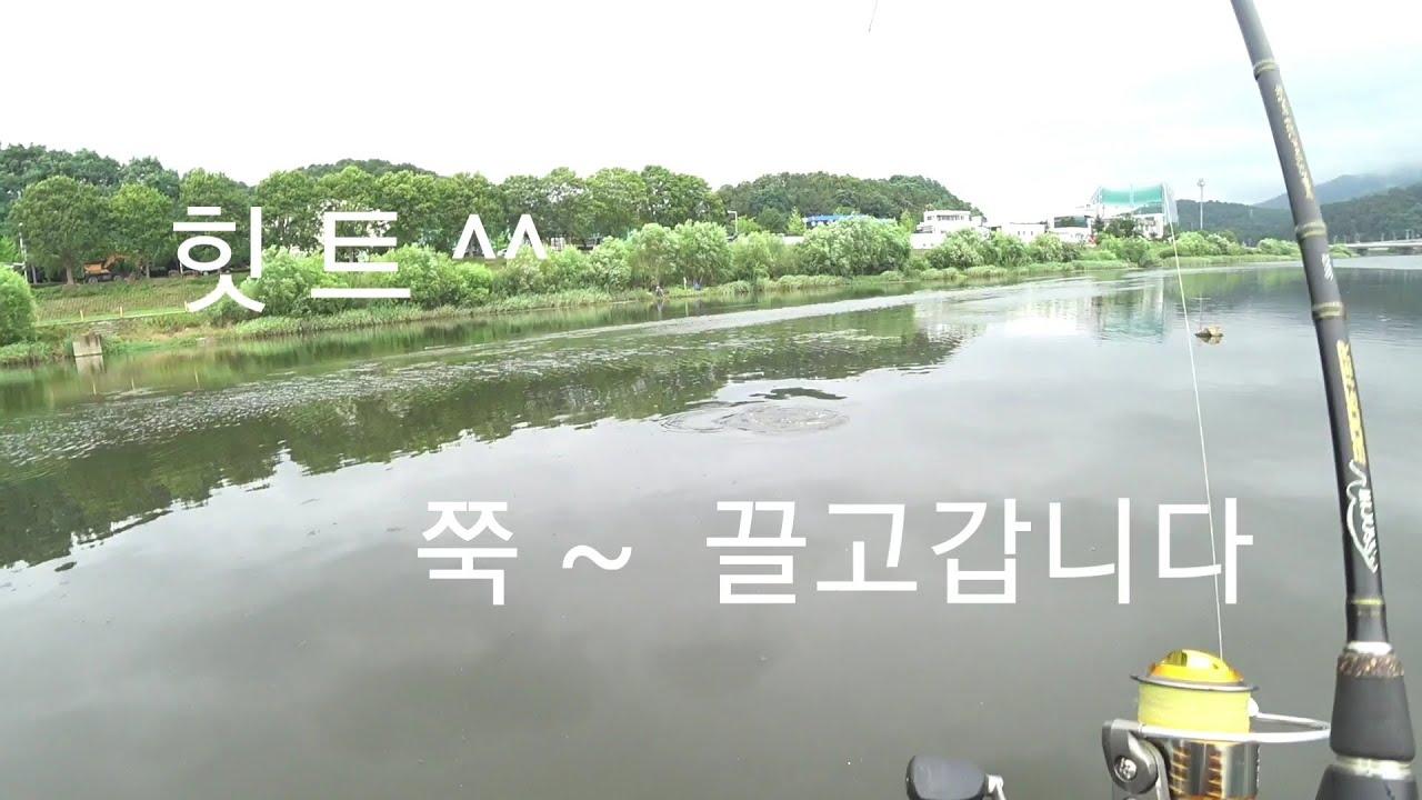 잉어낚시 ~ 잉어루어낚시 ~ ( 낮은 수심 잉어기포 )