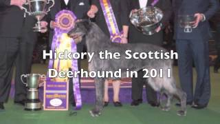Best In Show Extraordinary Dog Friends