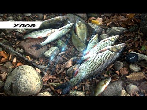 калининград рыбалка осенью