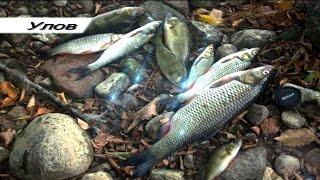 Рыбалка на реке Лава, Калининградская область. Fishing. L-Minnow 44