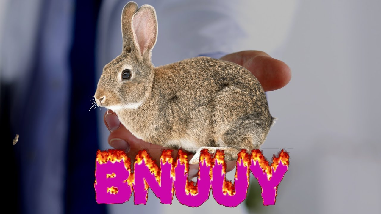 bnuuy