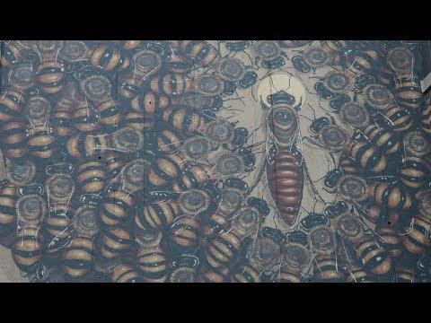Honeybee Mural at the Smithsonian's National Zoo