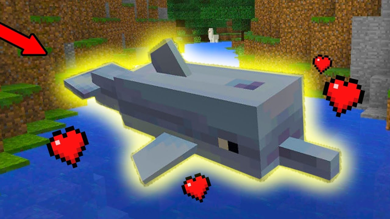 How To Find and Tame DOLPHINS in Minecraft PE (Pocket Edition) MCPE 9.9  Update Addon