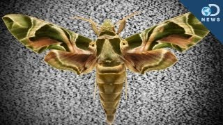 5 Incredible Insect Superpowers