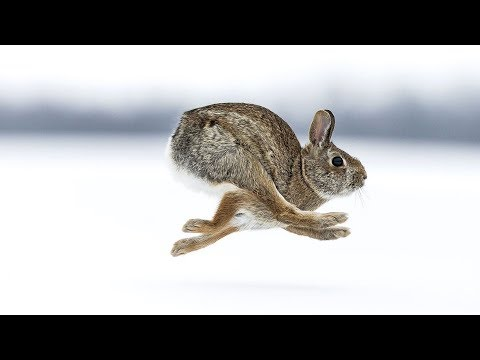 Fastest Wildlife Predators - Full Documentary HD