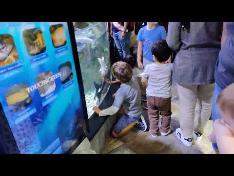 Dubai Aquarium & Underwater Zoo @ Dubai Mall