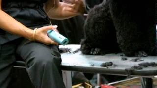 Sue Zecco On Poodle Feet