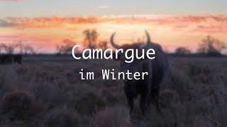 Loches - Camargue im Winter