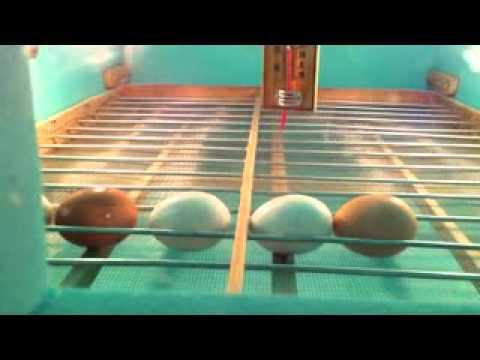vezet ne inkubator