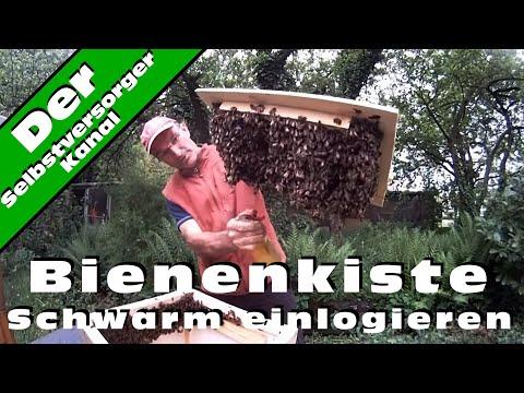 Bienenkiste Schwarm einlogieren