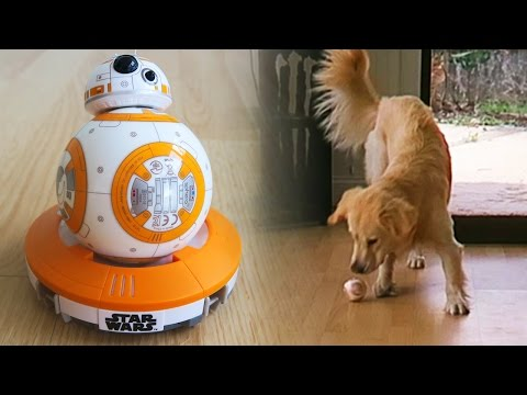 Cooper vs Sphero BB8 Remote Control Droid! Super Cooper Sunday 41  Star Wars!