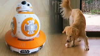 Cooper vs Sphero BB-8 Remote Control Droid! (Super Cooper Sunday #41 - Star Wars!)