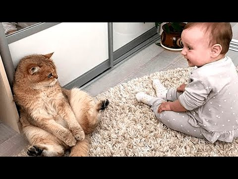 Cute Baby And Cats Playing Together 🤣 A Baby And A Cat Play Extremely Funny