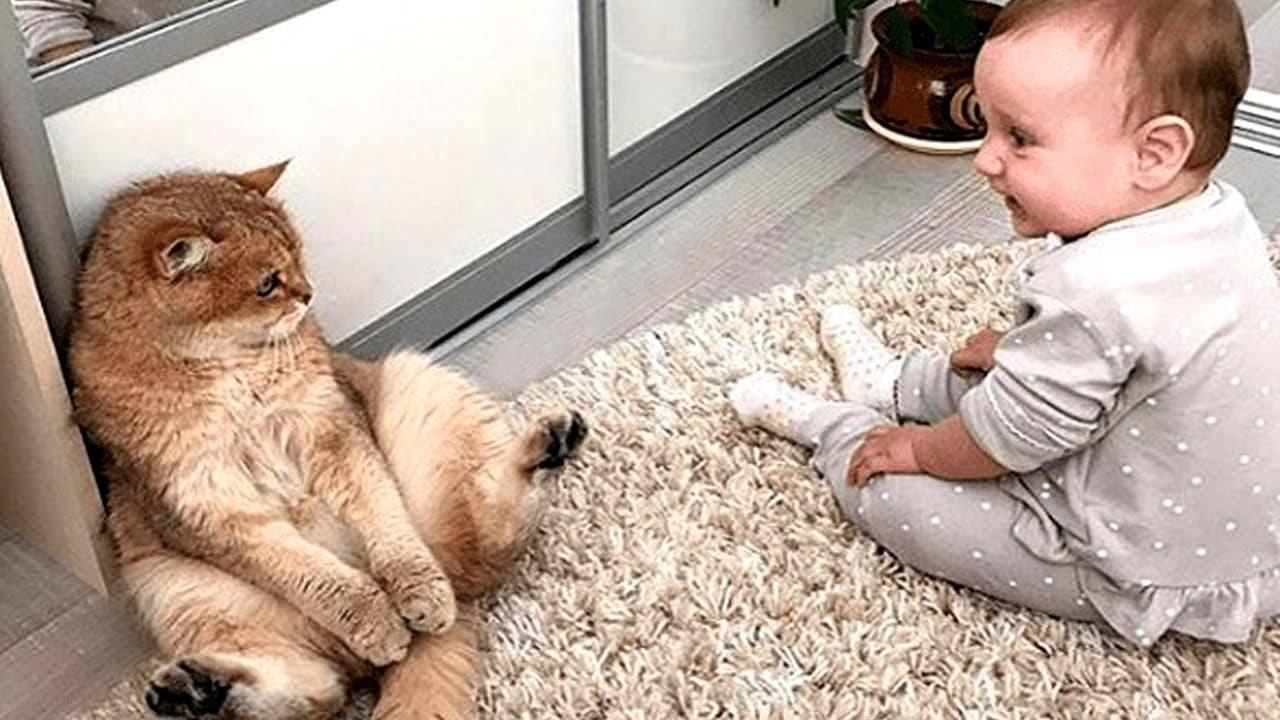 Cute Baby And Cats Playing Together ? A Baby And A Cat Play Extremely Funny