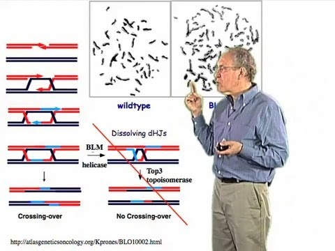 Resolution of Double Holliday Junctions - Jim Haber (Brandeis)