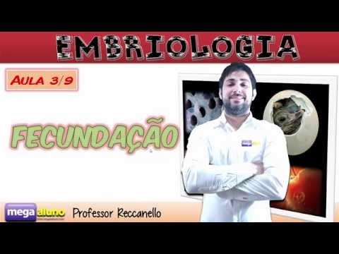 Fecundação humana (aula 3/9 de embriologia)