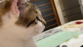 自分の動画チェック!猫のこーちゃん。