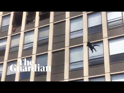 Cat-jumps-from-fifth-floor-of-burning-Chicago-building-and-survives-unharmed