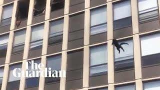 Cat jumps from fifthfloor of burning Chicago building and survives unharmed