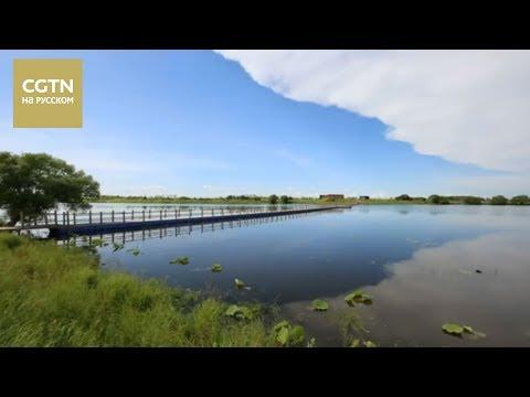 Провинция Хэйлунцзян принимает усиленные меры по охране водно-болотных угодий [Аge0+]