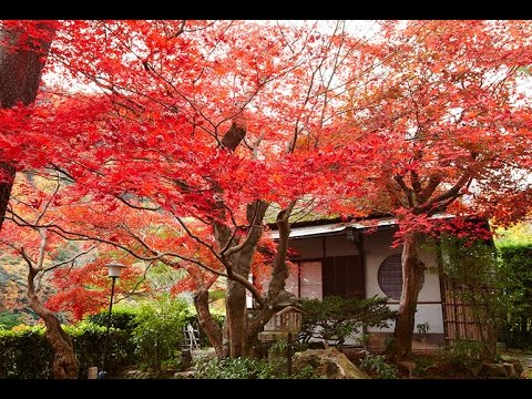 Suiran, a Luxury Collection Hotel - Kyoto, Japan