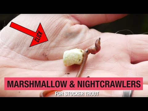 How To Fish For Trout Using Marshmallows & Nightcrawlers (100+ Years Proven!)