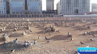 قبور الصحابة في المدينة المنورة ( البقيع )/ مقبرة البقيع من الداخل/جمال البقيع