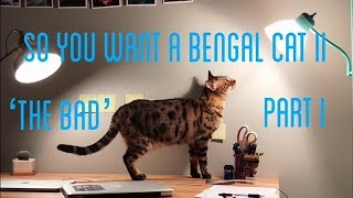 SO YOU WANT A BENGAL CAT II 'the bad' part I