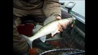 Рыбалка на Судака поздней осенью.