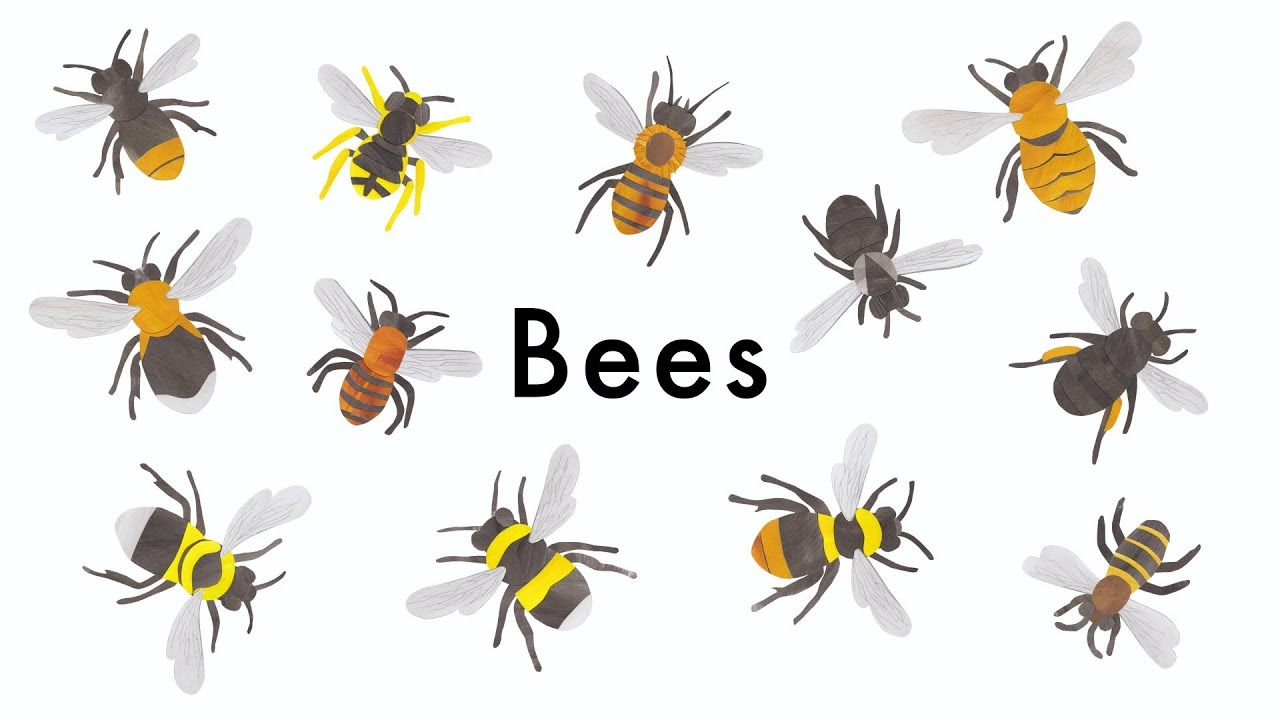 bees learn types of