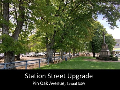 Succession plan for Avenue of Pin Oaks