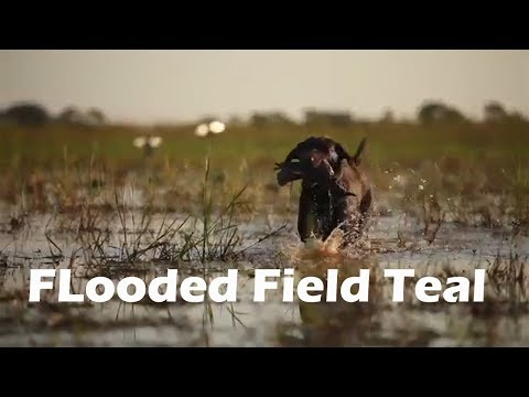 Flooded Field Teal Hunting In Louisiana S6 E2